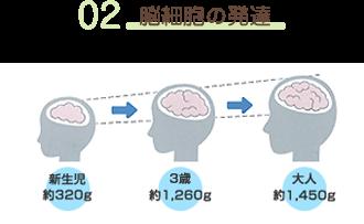 02脳細胞の発達