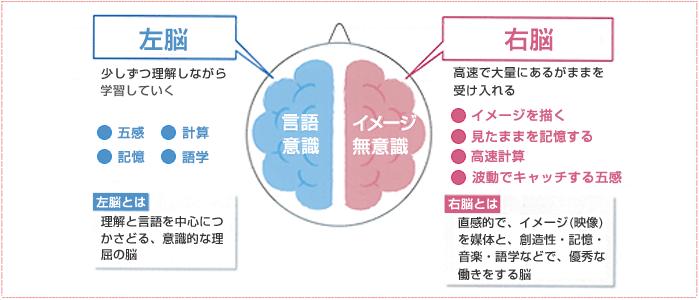 右脳の能力・左脳の能力